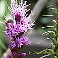 Unknown Green Pollinator